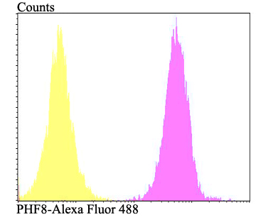 Flow cytometric analysis of SiHa cells with PHF8 antibody at 1/100 dilution (fuchsia) compared with an unlabelled control (cells without incubation with primary antibody; yellow). Alexa Fluor 488-conjugated goat anti-rabbit IgG was used as the secondary antibody.
