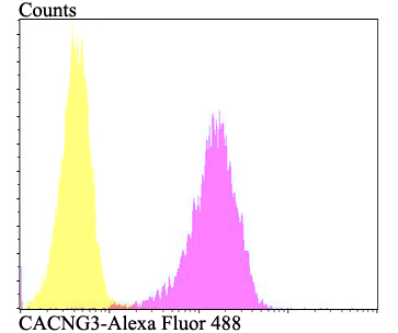 Flow cytometric analysis of SH-SY-5Y cells with CACNG3 antibody at 1/100 dilution (fuchsia) compared with an unlabelled control (cells without incubation with primary antibody; yellow). Alexa Fluor 488-conjugated goat anti-rabbit IgG was used as the secondary antibody.