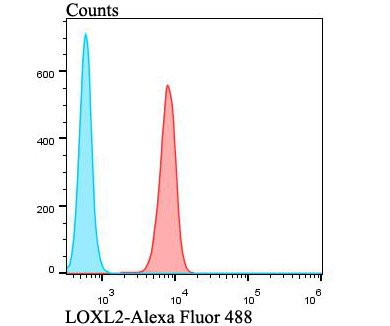 Flow cytometric analysis of A549 cells with LOXL2 antibody at 1/100 dilution (red) compared with an unlabelled control (cells without incubation with primary antibody; blue). Alexa Fluor 488-conjugated goat anti-rabbit IgG was used as the secondary antibody.