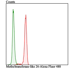 Flow cytometric analysis of SH-SY-5Y cells with Methyltransferase-like 26 antibody at 1/100 dilution (red) compared with an unlabelled control (cells without incubation with primary antibody; green). Alexa Fluor 488-conjugated goat anti-rabbit IgG was used as the secondary antibody.