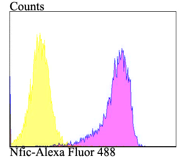 Flow cytometric analysis of SiHa cells with Nfic antibody at 1/100 dilution (purple) compared with an unlabelled control (cells without incubation with primary antibody; yellow). Alexa Fluor 488-conjugated goat anti-rabbit IgG was used as the secondary antibody.