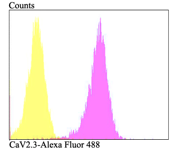 Flow cytometric analysis of 293T cells with CaV2.3 antibody at 1/100 dilution (fuchsia) compared with an unlabelled control (cells without incubation with primary antibody; yellow). Alexa Fluor 488-conjugated goat anti-rabbit IgG was used as the secondary antibody.
