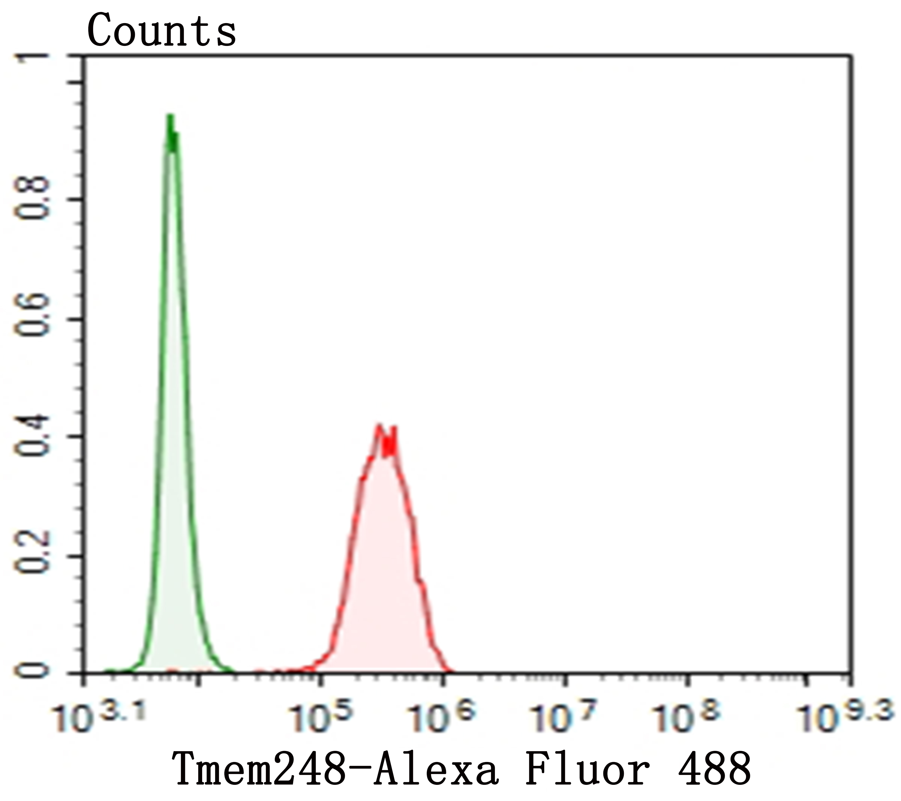 Flow cytometric analysis of SH-SY-5Y cells with Tmem248 antibody at 1/100 dilution (red) compared with an unlabelled control (cells without incubation with primary antibody; green). Alexa Fluor 488-conjugated goat anti-rabbit IgG was used as the secondary antibody.