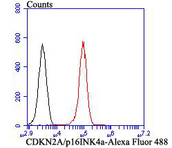 Flow cytometric analysis of 293T cells with CDKN2A/p16INK4a antibody at 1/100 dilution (red) compared with an unlabelled control (cells without incubation with primary antibody; black). Alexa Fluor 488-conjugated goat anti-rabbit IgG was used as the secondary antibody.