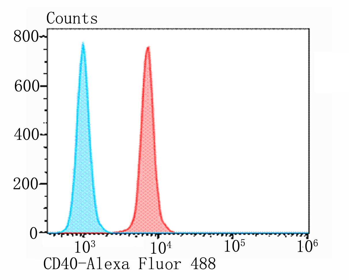 Flow cytometric analysis of MG-63 cells with CD40 antibody at 1/100 dilution (red) compared with an unlabelled control (cells without incubation with primary antibody; blue). Alexa Fluor 488-conjugated goat anti-rabbit IgG was used as the secondary antibody.