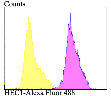 Flow cytometric analysis of MG-63 cells with HEC1 antibody at 1/100 dilution (purple) compared with an unlabelled control (cells without incubation with primary antibody; yellow). Alexa Fluor 488-conjugated goat anti-rabbit IgG was used as the secondary antibody.