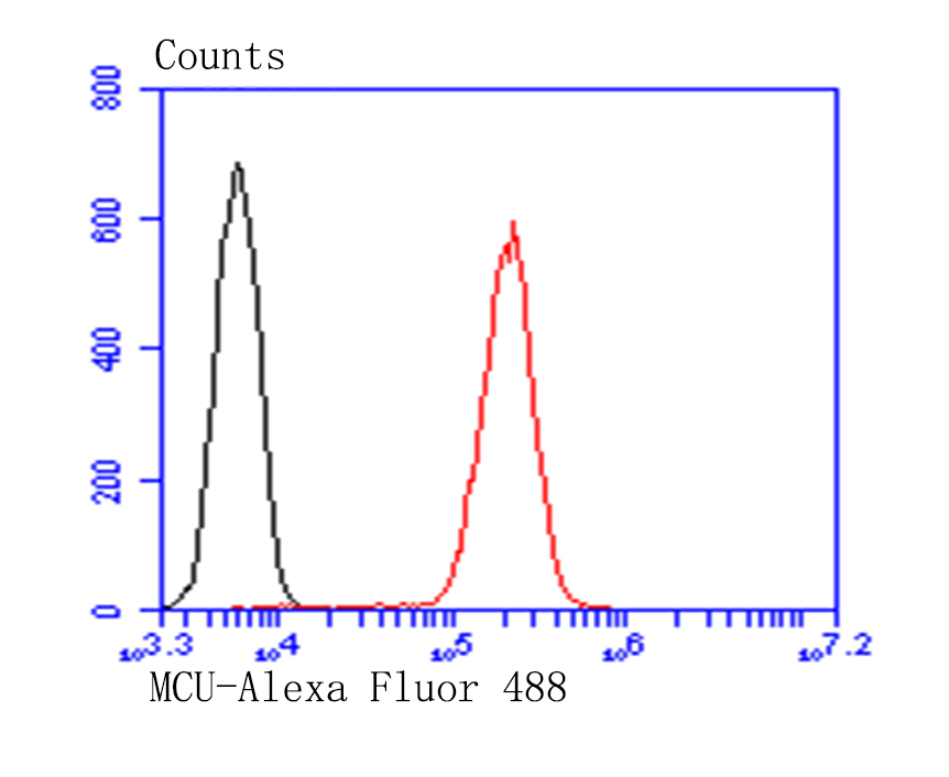 Flow cytometric analysis of A549 cells with MCU antibody at 1/100 dilution (red) compared with an unlabelled control (cells without incubation with primary antibody; black). Alexa Fluor 488-conjugated goat anti-rabbit IgG was used as the secondary antibody.
