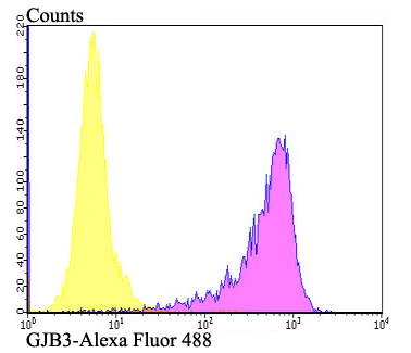 Flow cytometric analysis of SKOV-3 cells with Connexin-32 antibody at 1/100 dilution (fuchsia) compared with an unlabelled control (cells without incubation with primary antibody; yellow). Alexa Fluor 488-conjugated goat anti-rabbit IgG was used as the secondary antibody.