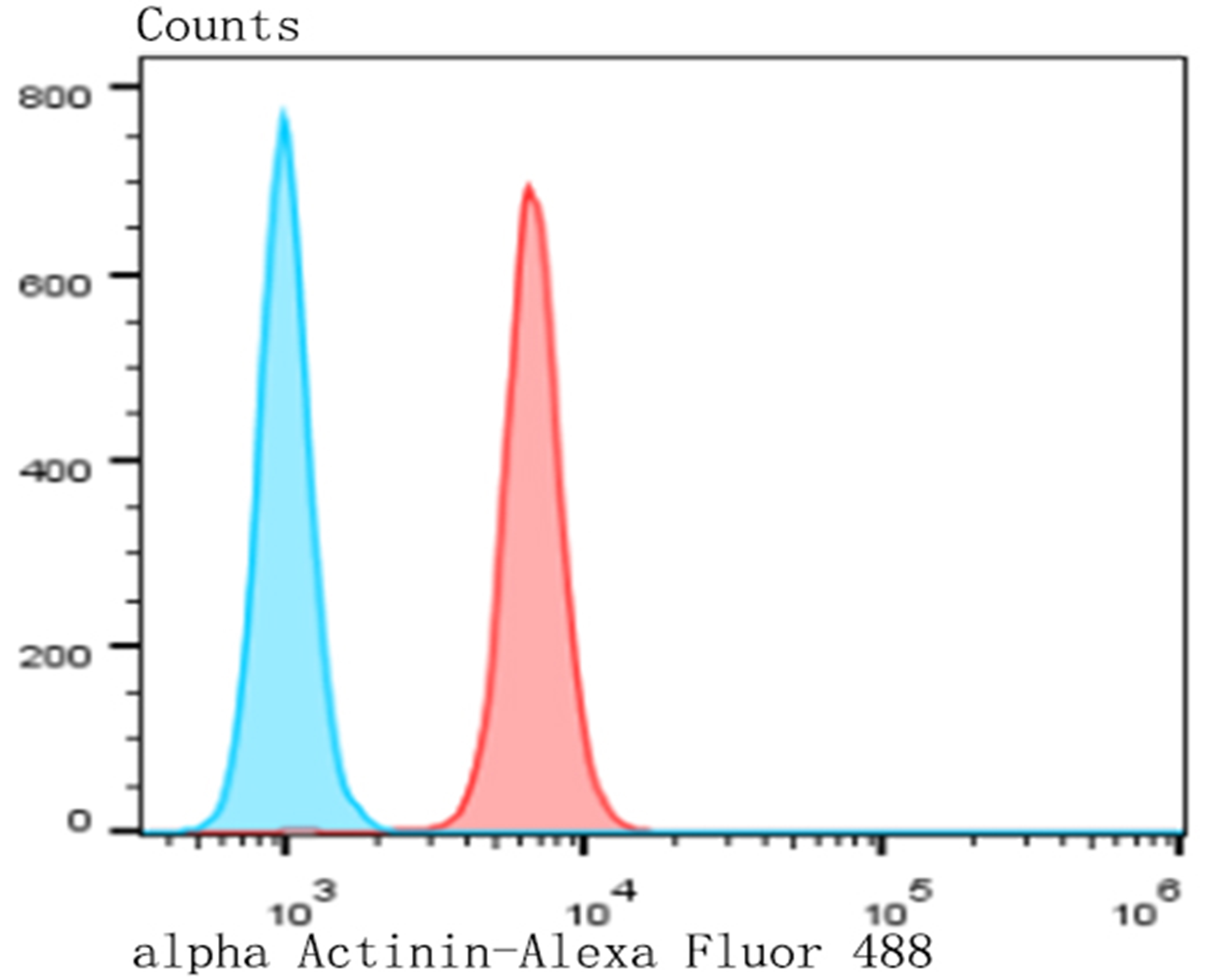 Flow cytometric analysis of MG-63 cells with alpha Actinin antibody at 1/100 dilution (red) compared with an unlabelled control (cells without incubation with primary antibody; blue). Alexa Fluor 488-conjugated goat anti-rabbit IgG was used as the secondary antibody.