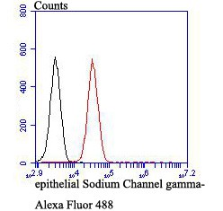 Flow cytometric analysis of SCNN1G was done on 293T cells. The cells were fixed, permeabilized and stained with the primary antibody (ER1803-61, 1/50) (red). After incubation of the primary antibody at room temperature for an hour, the cells were stained with a Alexa Fluor®488 conjugate-Goat anti-Rabbit IgG Secondary antibody at 1/1000 dilution for 30 minutes.Unlabelled sample was used as a control (cells without incubation with primary antibody; black).