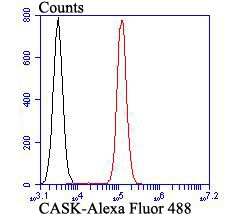 Flow cytometric analysis of HT-29 cells with CASK antibody at 1/100 dilution (red) compared with an unlabelled control (cells without incubation with primary antibody; black). Alexa Fluor 488-conjugated goat anti-rabbit IgG was used as the secondary antibody.