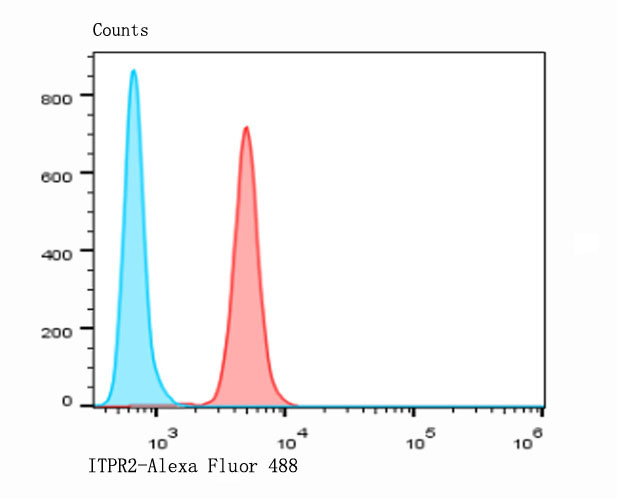 Flow cytometric analysis of HepG2 cells with ITPR2 antibody at 1/100 dilution (red) compared with an unlabelled control (cells without incubation with primary antibody; blue). Alexa Fluor 488-conjugated goat anti-rabbit IgG was used as the secondary antibody.