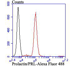 Flow cytometric analysis of Prolactin/PRL was done on SiHa cells. The cells were fixed, permeabilized and stained with Prolactin/PRL antibody at 1/100 dilution (red) compared with an unlabelled control (cells without incubation with primary antibody; black). After incubation of the primary antibody on room temperature for an hour, the cells was stained with a Alexa Fluor™ 488-conjugated goat anti-rabbit IgG Secondary antibody at 1/500 dilution for 30 minutes.