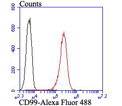 Flow cytometric analysis of CD99 was done on 293T cells. The cells were fixed, permeabilized and stained with CD99 antibody at 1/100 dilution (red) compared with an unlabelled control (cells without incubation with primary antibody; black). After incubation of the primary antibody on room temperature for an hour, the cells was stained with a Alexa Fluor™ 488-conjugated goat anti-rabbit IgG Secondary antibody at 1/500 dilution for 30 minutes.