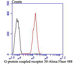 Flow cytometric analysis of G-protein coupled receptor 30 was done on SH-SY-5Y cells. The cells were fixed, permeabilized and stained with G-protein coupled receptor 30 antibody at 1/100 dilution (red) compared with an unlabelled control (cells without incubation with primary antibody; black). After incubation of the primary antibody on room temperature for 1 hour, the cells was stained with a Alexa Fluor™ 488-conjugated goat anti-rabbit IgG Secondary antibody at 1/500 dilution for 30 minutes.
