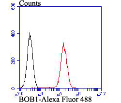 Flow cytometric analysis of BOB1 was done on Daudi cells. The cells were fixed, permeabilized and stained with BOB1 antibody at 1/100 dilution (red) compared with an unlabelled control (cells without incubation with primary antibody; black). After incubation of the primary antibody on room temperature for an hour, the cells was stained with a Alexa Fluor™ 488-conjugated goat anti-rabbit IgG Secondary antibody at 1/500 dilution for 30 minutes.