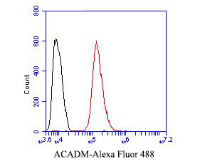 Flow cytometric analysis of ACADM was done on Hela cells. The cells were fixed, permeabilized and stained with the primary antibody (ER1804-01, 1/50) (red). After incubation of the primary antibody at room temperature for an hour, the cells were stained with a Alexa Fluor 488-conjugated Goat anti-Rabbit IgG Secondary antibody at 1/1000 dilution for 30 minutes.Unlabelled sample was used as a control (cells without incubation with primary antibody; black).