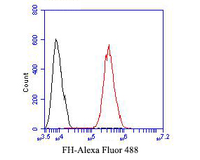 Flow cytometric analysis of FH was done on HCT116 cells. The cells were fixed, permeabilized and stained with the primary antibody (ER1901-10, 1/50) (red). After incubation of the primary antibody at room temperature for an hour, the cells were stained with a Alexa Fluor 488-conjugated Goat anti-Rabbit IgG Secondary antibody at 1/1000 dilution for 30 minutes.Unlabelled sample was used as a control (cells without incubation with primary antibody; black).