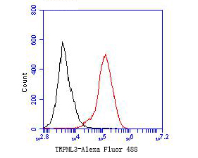 Flow cytometric analysis of TRPML3 was done on F9 cells. The cells were fixed, permeabilized and stained with the primary antibody (ER1901-21, 1/50) (red). After incubation of the primary antibody at room temperature for an hour, the cells were stained with a Alexa Fluor 488-conjugated Goat anti-Rabbit IgG Secondary antibody at 1/1000 dilution for 30 minutes.Unlabelled sample was used as a control (cells without incubation with primary antibody; black).