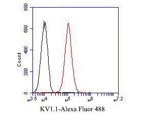 Flow cytometric analysis of KV1.1 was done on A549 cells. The cells were fixed, permeabilized and stained with the primary antibody (ER1901-23, 1/50) (red). After incubation of the primary antibody at room temperature for an hour, the cells were stained with a Alexa Fluor 488-conjugated Goat anti-Rabbit IgG Secondary antibody at 1/1000 dilution for 30 minutes.Unlabelled sample was used as a control (cells without incubation with primary antibody; black).<br /> FC M