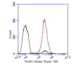 Flow cytometric analysis of FoxP1 was done on MCF-7 cells. The cells were fixed, permeabilized and stained with the primary antibody (ER1901-26, 1/50) (red). After incubation of the primary antibody at room temperature for an hour, the cells were stained with a Alexa Fluor 488-conjugated Goat anti-Rabbit IgG Secondary antibody at 1/1000 dilution for 30 minutes.Unlabelled sample was used as a control (cells without incubation with primary antibody; black).