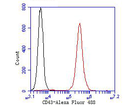 Flow cytometric analysis of CD43 was done on Jurkat cells. The cells were fixed, permeabilized and stained with the primary antibody (ER1901-28, 1/50) (red). After incubation of the primary antibody at room temperature for an hour, the cells were stained with a Alexa Fluor 488-conjugated goat anti-rabbit IgG Secondary antibody at 1/1000 dilution for 30 minutes.Unlabelled sample was used as a control (cells without incubation with primary antibody; black).