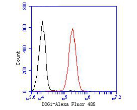 Flow cytometric analysis of DOG1 was done on A549 cells. The cells were fixed, permeabilized and stained with the primary antibody (ER1901-30, 1/50) (red). After incubation of the primary antibody at room temperature for an hour, the cells were stained with a Alexa Fluor 488-conjugated goat anti-rabbit IgG Secondary antibody at 1/1000 dilution for 30 minutes.Unlabelled sample was used as a control (cells without incubation with primary antibody; black).