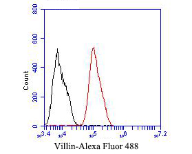 Flow cytometric analysis of Villin1 was done on HCT116 cells. The cells were fixed, permeabilized and stained with the primary antibody (ER1901-31, 1/50) (red). After incubation of the primary antibody at room temperature for an hour, the cells were stained with a Alexa Fluor 488-conjugated Goat anti-Rabbit IgG Secondary antibody at 1/1000 dilution for 30 minutes.Unlabelled sample was used as a control (cells without incubation with primary antibody; black).