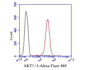 Flow cytometric analysis of AKT3 was done on EA.hy926 cells. The cells were fixed, permeabilized and stained with the primary antibody (ER1901-33, 1/50) (red). After incubation of the primary antibody at room temperature for an hour, the cells were stained with a Alexa Fluor 488-conjugated Goat anti-Rabbit IgG Secondary antibody at 1/1000 dilution for 30 minutes.Unlabelled sample was used as a control (cells without incubation with primary antibody; black).