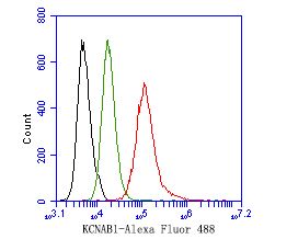 Flow cytometric analysis of KCNAB1 was done on JAR cells. The cells were fixed, permeabilized and stained with the primary antibody (ER1901-34, 1/50) (red). After incubation of the primary antibody at room temperature for an hour, the cells were stained with a Alexa Fluor 488-conjugated Goat anti-Rabbit IgG Secondary antibody at 1/1000 dilution for 30 minutes.Unlabelled sample was used as a control (cells without incubation with primary antibody; black).