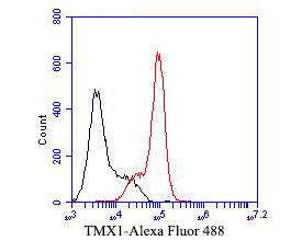 Flow cytometric analysis of TMX1 was done on F9 cells. The cells were fixed, permeabilized and stained with the primary antibody (ER1901-36, 1/50) (red). After incubation of the primary antibody at room temperature for an hour, the cells were stained with a Alexa Fluor 488-conjugated Goat anti-Rabbit IgG Secondary antibody at 1/1000 dilution for 30 minutes.Unlabelled sample was used as a control (cells without incubation with primary antibody; black).