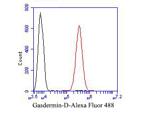 Flow cytometric analysis of Gasdermin D (N terminal) was done on SiHa cells. The cells were fixed, permeabilized and stained with the primary antibody (ER1901-37, 1/50) (red). After incubation of the primary antibody at room temperature for an hour, the cells were stained with a Alexa Fluor 488-conjugated Goat anti-Rabbit IgG Secondary antibody at 1/1000 dilution for 30 minutes.Unlabelled sample was used as a control (cells without incubation with primary antibody; black).
