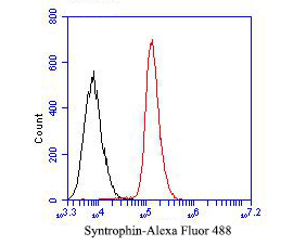 Flow cytometric analysis of Syntrophin alpha 1 was done on SiHa cells. The cells were fixed, permeabilized and stained with the primary antibody (ER1901-40, 1/50) (red). After incubation of the primary antibody at room temperature for an hour, the cells were stained with a Alexa Fluor 488-conjugated Goat anti-Rabbit IgG Secondary antibody at 1/1000 dilution for 30 minutes.Unlabelled sample was used as a control (cells without incubation with primary antibody; black).