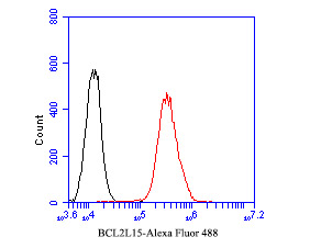 Flow cytometric analysis of BCL2L15 was done on A549 cells. The cells were fixed, permeabilized and stained with the primary antibody (ER1901-44, 1/50) (red). After incubation of the primary antibody at room temperature for an hour, the cells were stained with a Alexa Fluor 488-conjugated Goat anti-Rabbit IgG Secondary antibody at 1/1000 dilution for 30 minutes.Unlabelled sample was used as a control (cells without incubation with primary antibody; black).