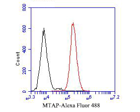 Flow cytometric analysis of MTAP was done on JAR cells. The cells were fixed, permeabilized and stained with the primary antibody (ER1901-47, 1/50) (red). After incubation of the primary antibody at room temperature for an hour, the cells were stained with a Alexa Fluor 488-conjugated Goat anti-Rabbit IgG Secondary antibody at 1/1000 dilution for 30 minutes.Unlabelled sample was used as a control (cells without incubation with primary antibody; black).