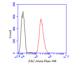Flow cytometric analysis of ZAC was done on SH-SY5Y cells. The cells were fixed, permeabilized and stained with the primary antibody (ER1901-48, 1/50) (red). After incubation of the primary antibody at room temperature for an hour, the cells were stained with a Alexa Fluor 488-conjugated Goat anti-Rabbit IgG Secondary antibody at 1/1000 dilution for 30 minutes.Unlabelled sample was used as a control (cells without incubation with primary antibody; black).