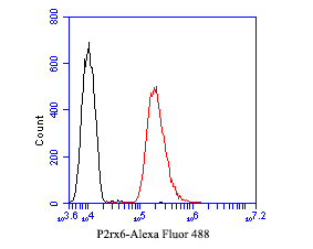 Flow cytometric analysis of P2X6 was done on SH-SY5Y cells. The cells were fixed, permeabilized and stained with the primary antibody (ER1901-49, 1/50) (red). After incubation of the primary antibody at room temperature for an hour, the cells were stained with a Alexa Fluor 488-conjugated Goat anti-Rabbit IgG Secondary antibody at 1/1000 dilution for 30 minutes.Unlabelled sample was used as a control (cells without incubation with primary antibody; black).