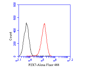Flow cytometric analysis of P2X7 was done on THP-1 cells. The cells were fixed, permeabilized and stained with the primary antibody (ER1901-50, 1/50) (red). After incubation of the primary antibody at room temperature for an hour, the cells were stained with a Alexa Fluor 488-conjugated Goat anti-Rabbit IgG Secondary antibody at 1/1000 dilution for 30 minutes.Unlabelled sample was used as a control (cells without incubation with primary antibody; black).