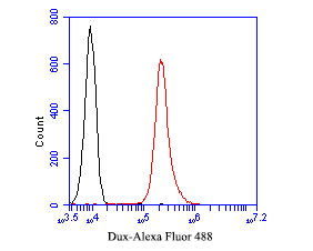 Flow cytometric analysis of Dux was done on MG-63 cells. The cells were fixed, permeabilized and stained with the primary antibody (ER1901-52, 1/50) (red). After incubation of the primary antibody at room temperature for an hour, the cells were stained with a Alexa Fluor 488-conjugated Goat anti-Rabbit IgG Secondary antibody at 1/1000 dilution for 30 minutes.Unlabelled sample was used as a control (cells without incubation with primary antibody; black).