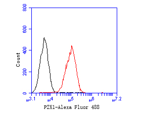 Flow cytometric analysis of P2RX1 was done on THP-1 cells. The cells were fixed, permeabilized and stained with the primary antibody (ER1901-53, 1/50) (red). After incubation of the primary antibody at room temperature for an hour, the cells were stained with a Alexa Fluor 488-conjugated Goat anti-Rabbit IgG Secondary antibody at 1/1000 dilution for 30 minutes.Unlabelled sample was used as a control (cells without incubation with primary antibody; black).