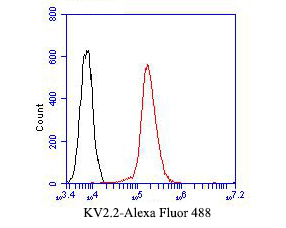 Flow cytometric analysis of KV2.2 was done on A431 cells. The cells were fixed, permeabilized and stained with the primary antibody (ER1901-55, 1/50) (red). After incubation of the primary antibody at room temperature for an hour, the cells were stained with a Alexa Fluor 488-conjugated Goat anti-Rabbit IgG Secondary antibody at 1/1000 dilution for 30 minutes.Unlabelled sample was used as a control (cells without incubation with primary antibody; black).