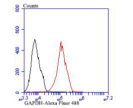 Flow cytometric analysis of GAPDH was done on MCF-7 cells. The cells were fixed, permeabilized and stained with GAPDH antibody at 1/50 dilution (red) compared with an unlabelled control (cells without incubation with primary antibody; black). After incubation of the primary antibody on room temperature for an hour, the cells was stained with a Alexa Fluor 488-conjugated goat anti-rabbit IgG Secondary antibody at 1/500 dilution for 30 minutes.