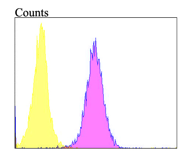 Flow cytometric analysis of Follistatin was done on HepG2 cells. The cells were fixed, permeabilized and stained with the primary antibody (ER1901-69, 1/100) (purple). After incubation of the primary antibody at room temperature for an hour, the cells were stained with a Alexa Fluor 488-conjugated goat anti-rabbit IgG Secondary antibody at 1/500 dilution for 30 minutes.Unlabelled sample was used as a control (cells without incubation with primary antibody; yellow).