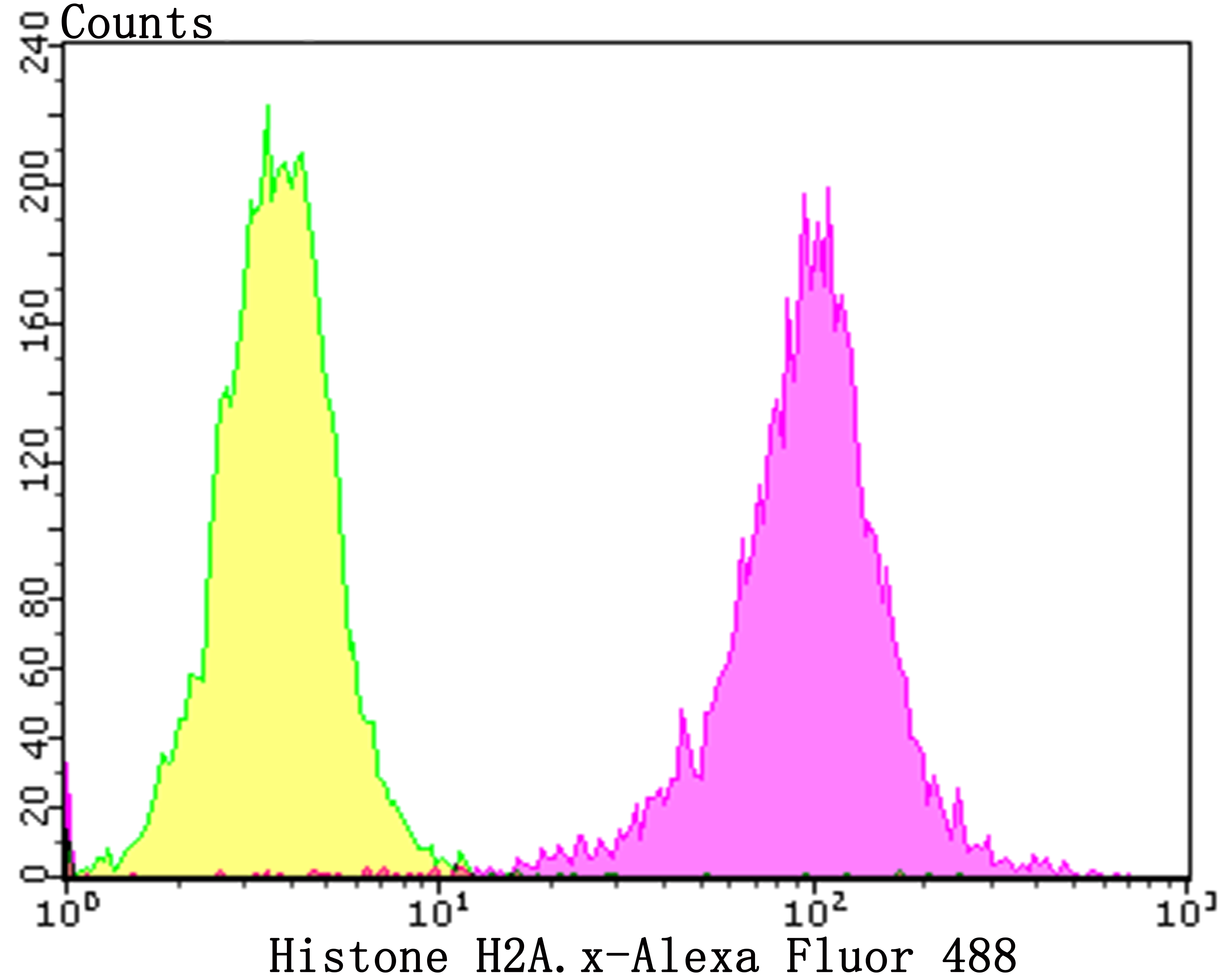 Flow cytometric analysis of Histone H2A.x was done on SHSY5Y cells. The cells were fixed, permeabilized and stained with the primary antibody (ER1901-70, 1/100) (purple). After incubation of the primary antibody at room temperature for an hour, the cells were stained with a Alexa Fluor 488-conjugated goat anti-rabbit IgG Secondary antibody at 1/500 dilution for 30 minutes.Unlabelled sample was used as a control (cells without incubation with primary antibody; yellow).
