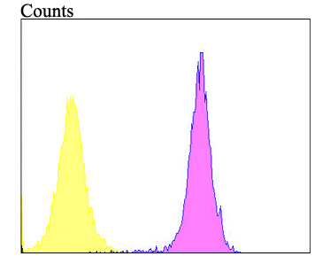 Flow cytometric analysis of Alpha-dystroglycan was done on A431 cells. The cells were fixed, permeabilized and stained with the primary antibody (ER1901-72, 1/100) (purple). After incubation of the primary antibody at room temperature for an hour, the cells were stained with a Alexa Fluor 488-conjugated goat anti-rabbit IgG Secondary antibody at 1/500 dilution for 30 minutes.Unlabelled sample was used as a control (cells without incubation with primary antibody; yellow).