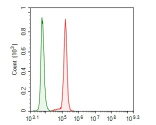 Flow cytometric analysis of GABARAPL2  was done on SHSY5Y cells. The cells were fixed, permeabilized and stained with the primary antibody (ER1901-73, 1/100) (red). After incubation of the primary antibody at room temperature for an hour, the cells were stained with a Alexa Fluor 488-conjugated goat anti-rabbit IgG Secondary antibody at 1/500 dilution for 30 minutes.Unlabelled sample was used as a control (cells without incubation with primary antibody; green).