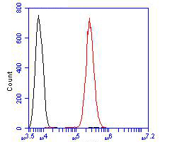 Flow cytometric analysis of delta 1 Catenin/CAS was done on Siha cells. The cells were fixed, permeabilized and stained with the primary antibody (ER1901-80, 1/100) (red). After incubation of the primary antibody at room temperature for an hour, the cells were stained with a Alexa Fluor 488-conjugated goat anti-rabbit IgG Secondary antibody at 1/500 dilution for 30 minutes.Unlabelled sample was used as a control (cells without incubation with primary antibody; black).
