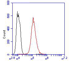 Flow cytometric analysis of Cytokeratin 5+6 was done on Hela cells. The cells were fixed, permeabilized and stained with the primary antibody (ER1901-86, 1/100) (red). After incubation of the primary antibody at room temperature for an hour, the cells were stained with a Alexa Fluor 488-conjugated goat anti-rabbit IgG Secondary antibody at 1/500 dilution for 30 minutes.Unlabelled sample was used as a control (cells without incubation with primary antibody; blcak).