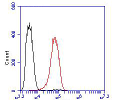 Flow cytometric analysis of SLC8B1 was done on Siha cells. The cells were fixed, permeabilized and stained with the primary antibody (ER1901-93, 1/100) (red). After incubation of the primary antibody at room temperature for an hour, the cells were stained with a Alexa Fluor 488-conjugated goat anti-rabbit IgG Secondary antibody at 1/500 dilution for 30 minutes.Unlabelled sample was used as a control (cells without incubation with primary antibody; blcak).