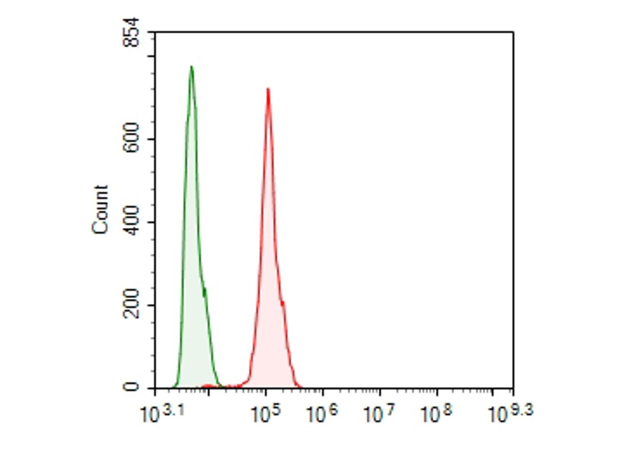 Flow cytometric analysis of FOLR1 was done on Hela cells. The cells were fixed, permeabilized and stained with the primary antibody (ER1901-95, 1/100) (red). After incubation of the primary antibody at room temperature for an hour, the cells were stained with a Alexa Fluor 488-conjugated goat anti-rabbit IgG Secondary antibody at 1/500 dilution for 30 minutes.Unlabelled sample was used as a control (cells without incubation with primary antibody; green).